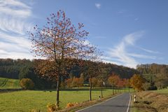 Cherry trees in autumn, country road in Holperdorp, Tecklenburg country, NRW, Germany Royalty Free Stock Photos