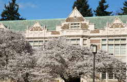 Cherry Trees in Bloom on Campus Stock Photography