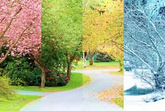 Cherry trees in bloom. A composite collage of four images of one street lined with cherry trees photographed in all four seasons from the exact same location Stock Photo