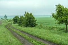 Cherry Trees Blossoming na estrada de terra com a paisagem da mola sob a estrada azul através do campo, mola de Skydirt imagens de stock royalty free