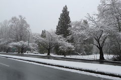 Cherry Trees Covered con neve sulla strada Fotografie Stock
