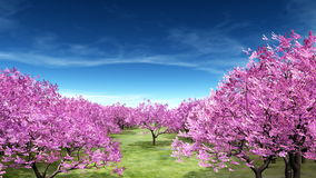 Cherry trees. 3D CG rendering of cherry trees Royalty Free Stock Photography