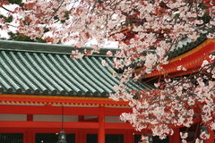 Cherry trees of Heian-jingu sh royalty free stock photo