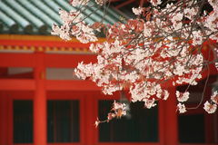 Cherry trees of Heian-jingu shrine Royalty Free Stock Photography