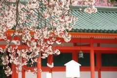 Cherry trees of kyoto Stock Photos