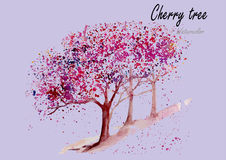 Cherry Trees Peinture tirée par la main d'aquarelle sur le fond blanc Photo stock