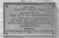 Cherry Trees Plaque, Washington DC Royalty Free Stock Photo