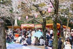 cherry trees spring 2019 stock photos