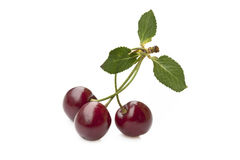 Cherry trio Royalty Free Stock Photo