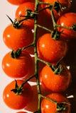 Cherry Truss Tomatoes sur le timbre images libres de droits