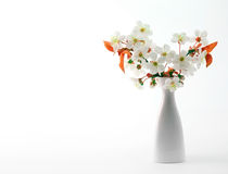 Cherry twig in bloom in vase Royalty Free Stock Photos