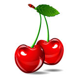 Cherry vector berry isolate on white background Stock Photography
