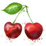 Cherry Vector Logo Design Template. Fruit Or Food Stock Photos