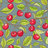 Cherry vector pattern. Cherry vector seamless pattern on color background Stock Image