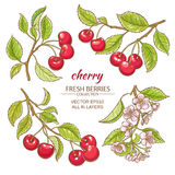 Cherry vector set. On white background Royalty Free Stock Image