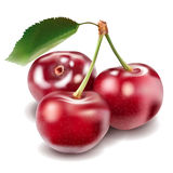 Cherry. Vector cherry on white background Royalty Free Stock Images