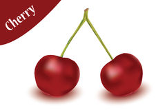 Cherry vector in white background, cherry vector Royalty Free Stock Photography