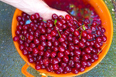 Cherry. Washing of fine cherry in a plastic container,photography Stock Image