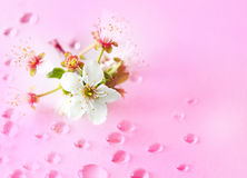 Cherry and Water Stock Photography