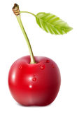 Cherry with water drops. Vector. Cherry with water drops Royalty Free Stock Photography