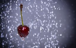 Cherry among water drops royalty free stock images
