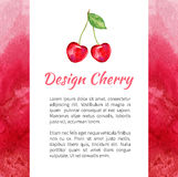 Cherry watercolor isolated on white background, Watercolor red texture, Design berry for packaging, vector fruit label royalty free illustration