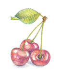 Cherry watercolor pencil illustration Stock Images