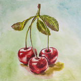 Cherry watercolor. Tripled cherry on the desk watercolor Royalty Free Stock Photo