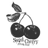 Cherry on a white background. sketch Stock Image