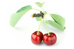Cherry on white Stock Photography