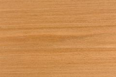 Cherry wood texture background on macro. Extremely high resolution photo Stock Photography