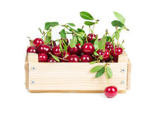 Cherry in wooden box Royalty Free Stock Image