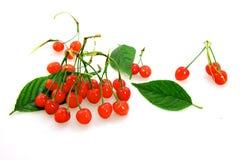Cherry. Yard cherry red fragrance of a hospital, a hospital fiery beauty ah Stock Photo