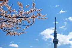Cherryblomning i den Tokyo och Tokyo Skytreen Royaltyfria Bilder