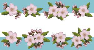Cherryblossom afia com espaço livre para seu texto Fotografia de Stock