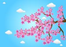 Cherryet blommar fjädern Royaltyfri Bild