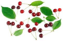Cherryet låter vara den mogna seten Royaltyfri Fotografi