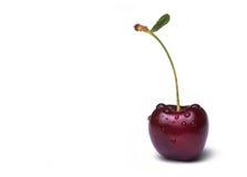 Cherryet tappar vatten Arkivfoto