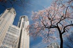 Cherryfjäder tokyo Arkivbild