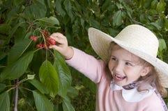 Cherryfruktträdgård royaltyfri bild