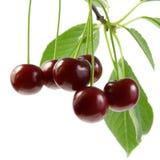 Cherrygreenleaves Royaltyfria Bilder