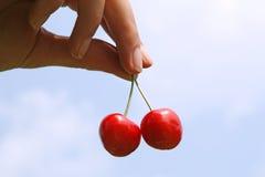 Cherryhand Arkivbilder
