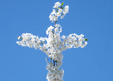 Cherrykors washington för 2010 blomningar Arkivbild
