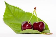 Cherryleaf Arkivbild