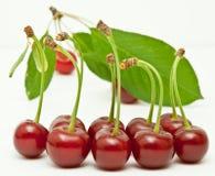 Cherrylineup royaltyfri fotografi