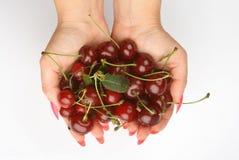 Cherrynäve Arkivbild