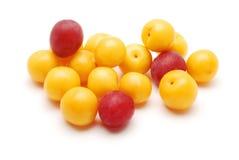 Cherryplommon Royaltyfria Bilder