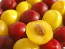 Cherryplommon Arkivfoton