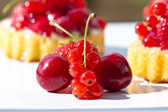 Cherryredcurrants arkivfoton