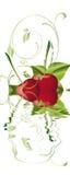 Cherrys Royalty Free Stock Photos